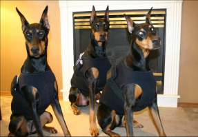 Rio, Dylan & Zena are shown sporting the MHDPC holters and vests!