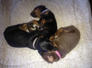 huddle of pups