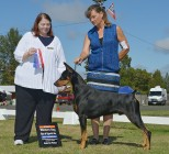 """Ch Foxfire N Electron's Easily The One WAC """"Sherman"""" Owned by Ann T. Strader Earned the following in 2016 AKC Conformation- Champion title Doberman Pinscher Club of America- Working Aptitude Certificate"""