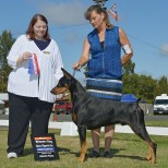 "Ch Foxfire N Electron's Easily The One WAC ""Sherman"" Owned by Ann T. Strader Earned the following in 2016 AKC Conformation- Champion title Doberman Pinscher Club of America- Working Aptitude Certificate"