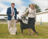 """GCH Heartwood's Dance With Me """"Elsie"""" Owned by Juanita & Jeff Fagan Bred by Juanita & Jeff Fagan Earned in 2016 AKC Conformation - Grand Champion"""