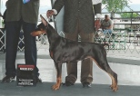 """CH Heartwood's Play With Fire """"Ember"""" Owned by Juanita & Jeff Fagan Bred by Juanita & Jeff Fagan Earned in 2016 AKC Conformation - Champion"""
