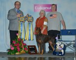 "Int Ch Black's Eye of the Hurricane v Rogue River CD RA CGCA, ASCA RAX ""Hurri"" Owned by Susan & Scott Lyter Bred by Susan Scott Lyter Earned the following in 2016 AKC Rally - Rally Excellent title AKC Obedience – Two High in Trials"